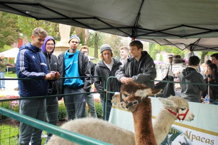 Photo by Hui Li '21. Alpacas visit Kimball Quad during Eco-Action's Harvest Festival.